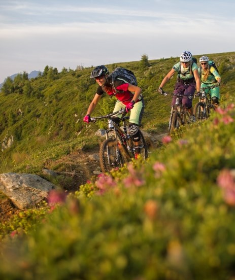 Alpine rose & alpenglow - Alpine pasture biking for trail bikers and pleasure cyclists