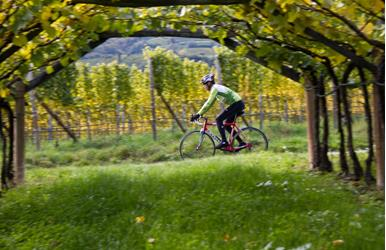 Central Wine Route